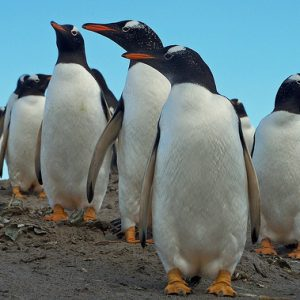 The Extinction of Penguins – Generation Justice